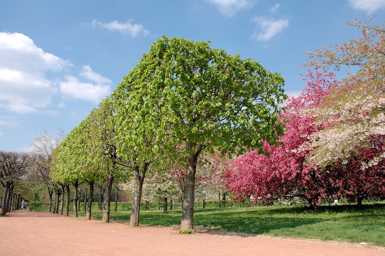 Frühling am Dresdner Elbufer
